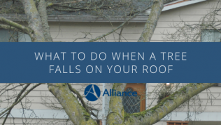 What to do when a tree falls on your roof